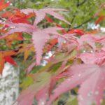 【日帰り】京都プチ散策~車で紅葉を見にいこう! 将軍塚ドライブ(1)