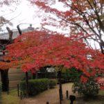 【日帰り】京都プチ散策~車で紅葉を見にいこう! 将軍塚ドライブ(2)~