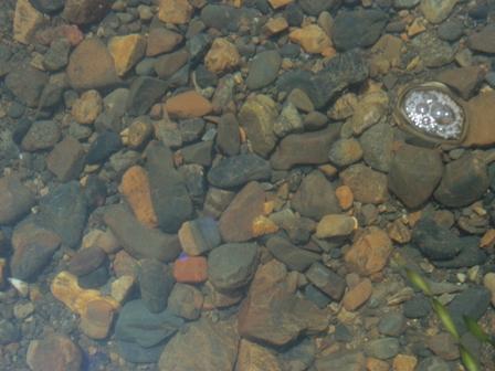 琵琶湖 ビーチサンダル