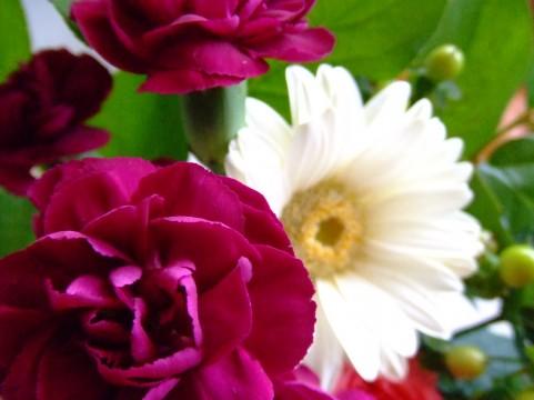 カーネーション花 母の日