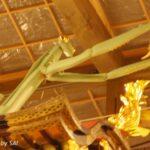 祇園祭 宵山レポート(3)蟷螂山・南観音山