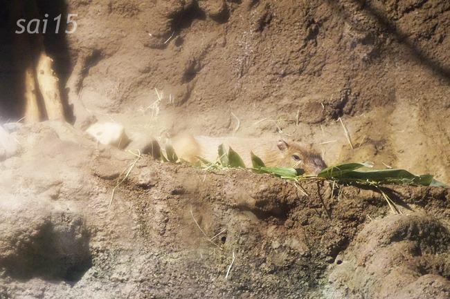 カピパラはねずみです 海遊館ヨガxベルメゾン (43)