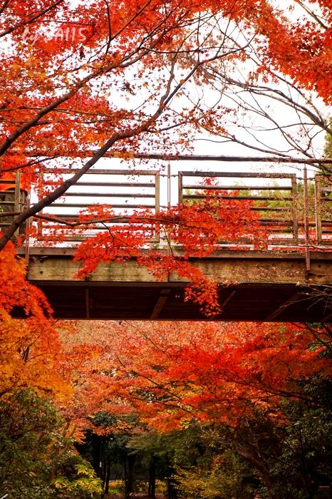 梅の小路公園・紅葉 (3)